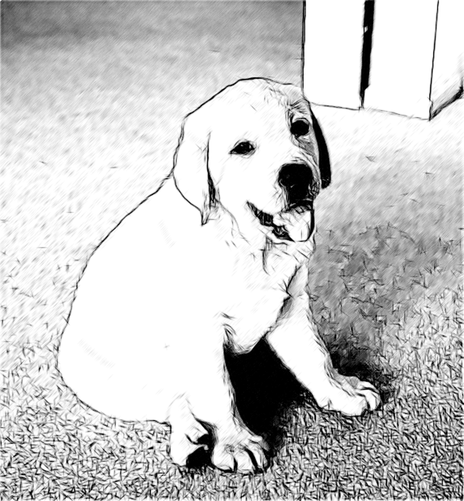 Labrador retriever puppies pencil charcoal drawings