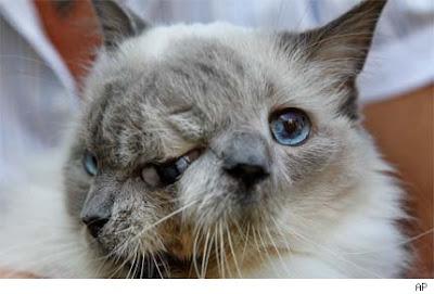 gato-con-dos-caras