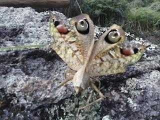Fauna Parque Estadual Serra Negra