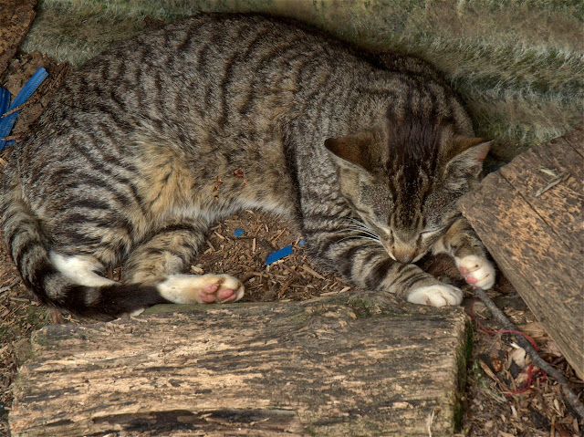 Little Tabby sleeps, from a tiny kitten, to best friends to adult, Little Tabby has been with us a long time