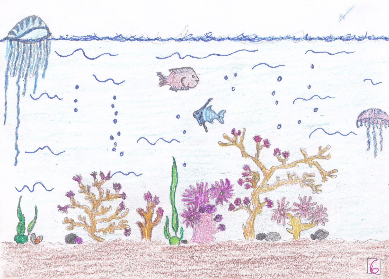 Arrecifes De Coral Para Ninos - Tracyengel.club
