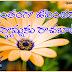 Cool Inspiring Life Quotations in Telugu Language