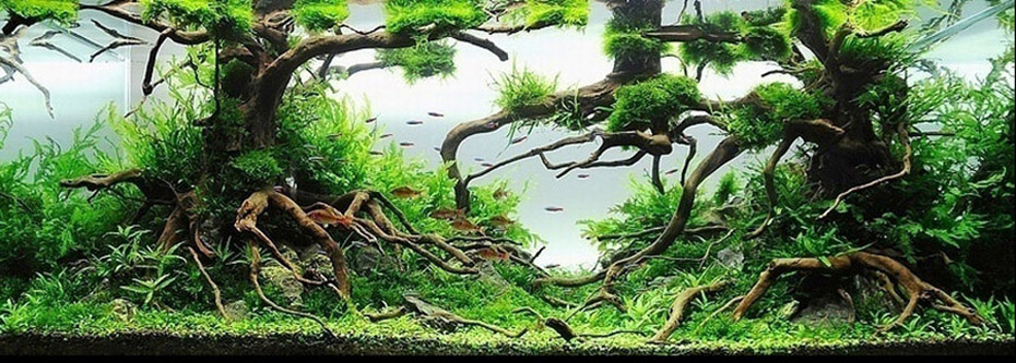 Within The Nature Aquarium Style, There Are Two Sub Styles. The First Being  The Driftwood Style, And The Second Being The Iwagumi Style.