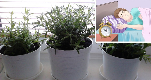 5-Houseplants-That-Prevent-Insomnia-AND-Purify-Your-Air
