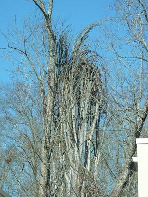 weird tree