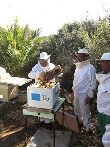 Casa d'abelles
