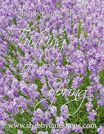 Spring FREE Emag