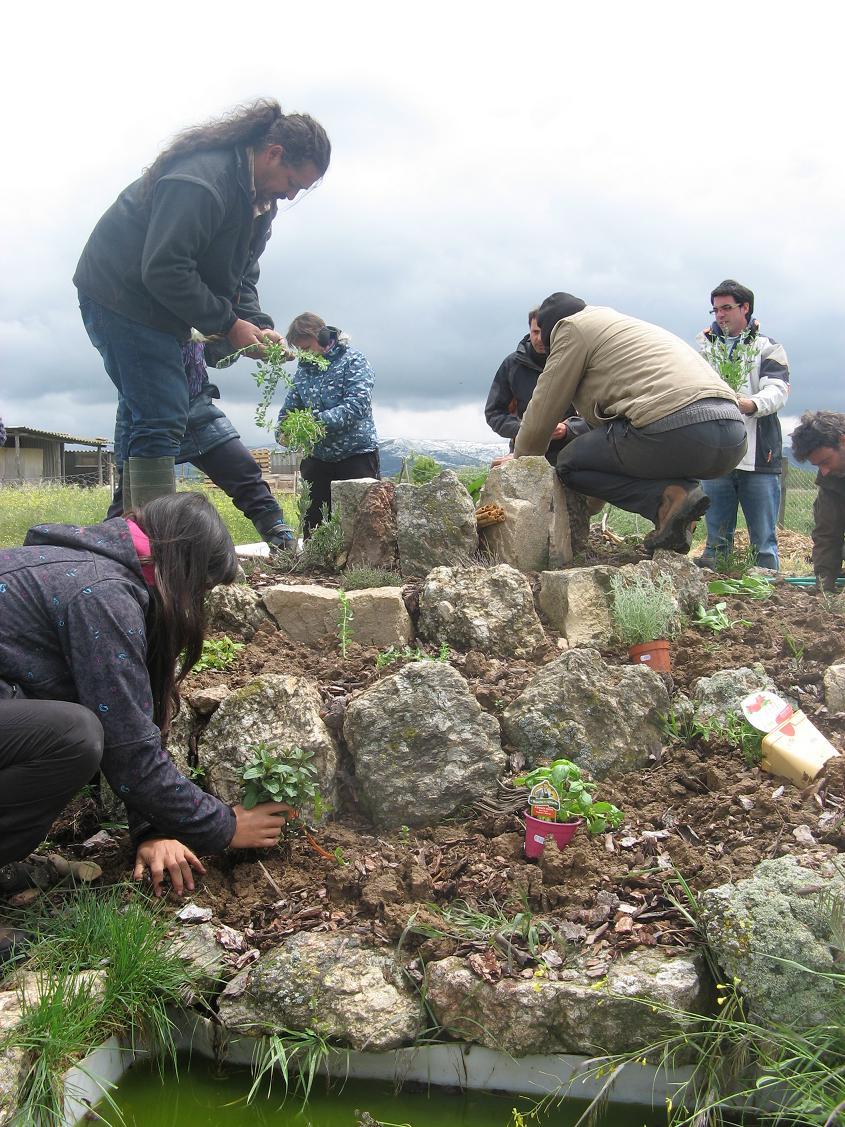 Ecologicos de segovia curso pr ctico de agricultura ecol gica Rotaciones de cultivos ecologicos
