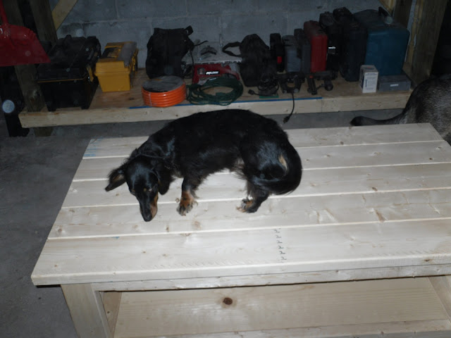 Maxi the doxi on our finished table.