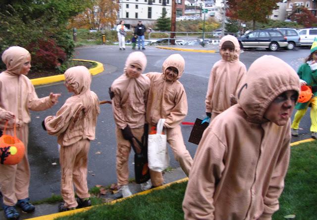 A mob of Meerkats from www.drjeanlayton.com
