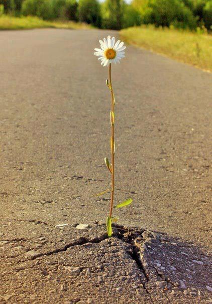 flor creciendo en el cemento