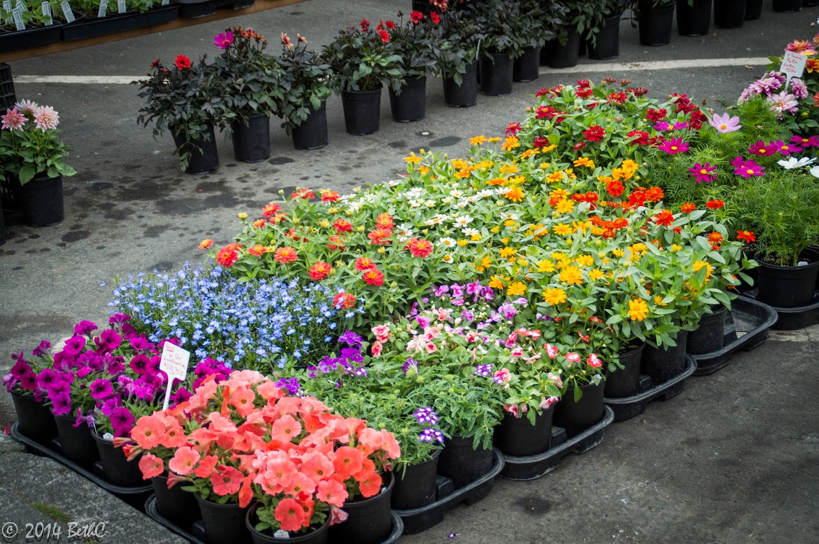Backyard Flower Farmer : You can even buy flowers for your garden at the Farmers Market!