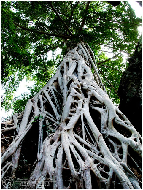 Photograph Root Tree