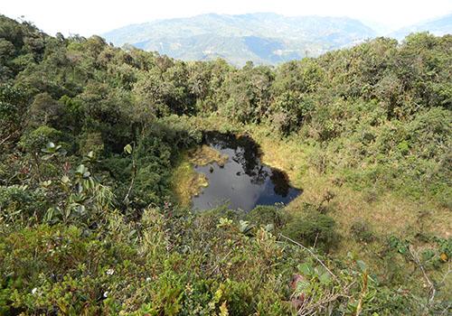 Bosque de Huamantanga
