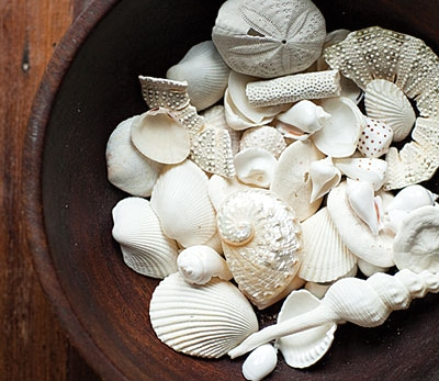 seashell collection display in bowl