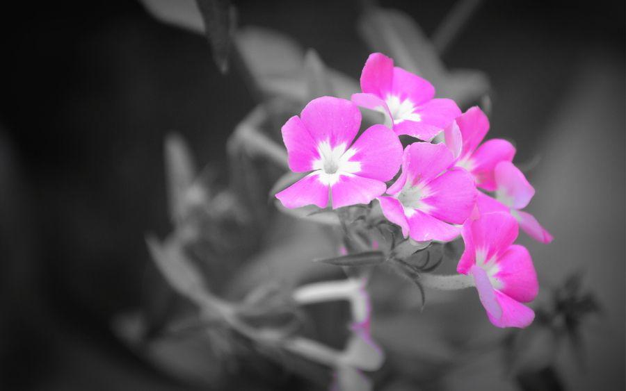 35. Flowers by krishna kansara