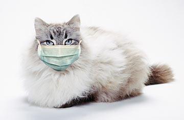 Flu Kucing Omah Kucing