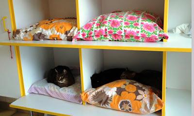 Mỗi con mèo là một cái gối êm để ngủ...