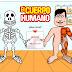 O corpo humano (Coñecemento do Medio, 2º e 3º Ciclo)