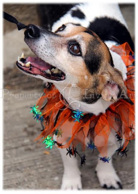 Mckinney Texas Dog Barking