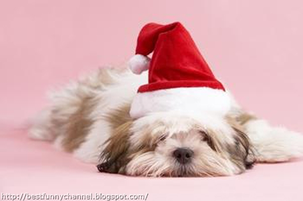Cute And Funny Pictures Of AnimalsChristmas 7