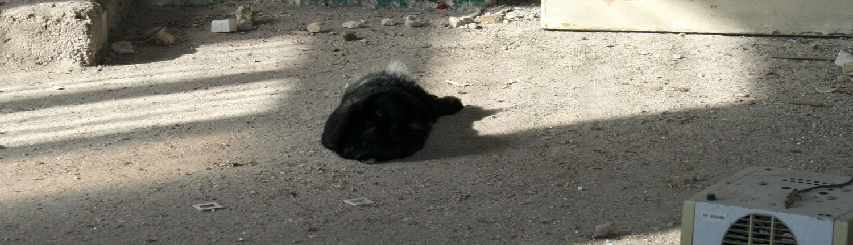 Sassy sunbathing
