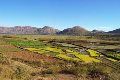 rizière de Madagascar