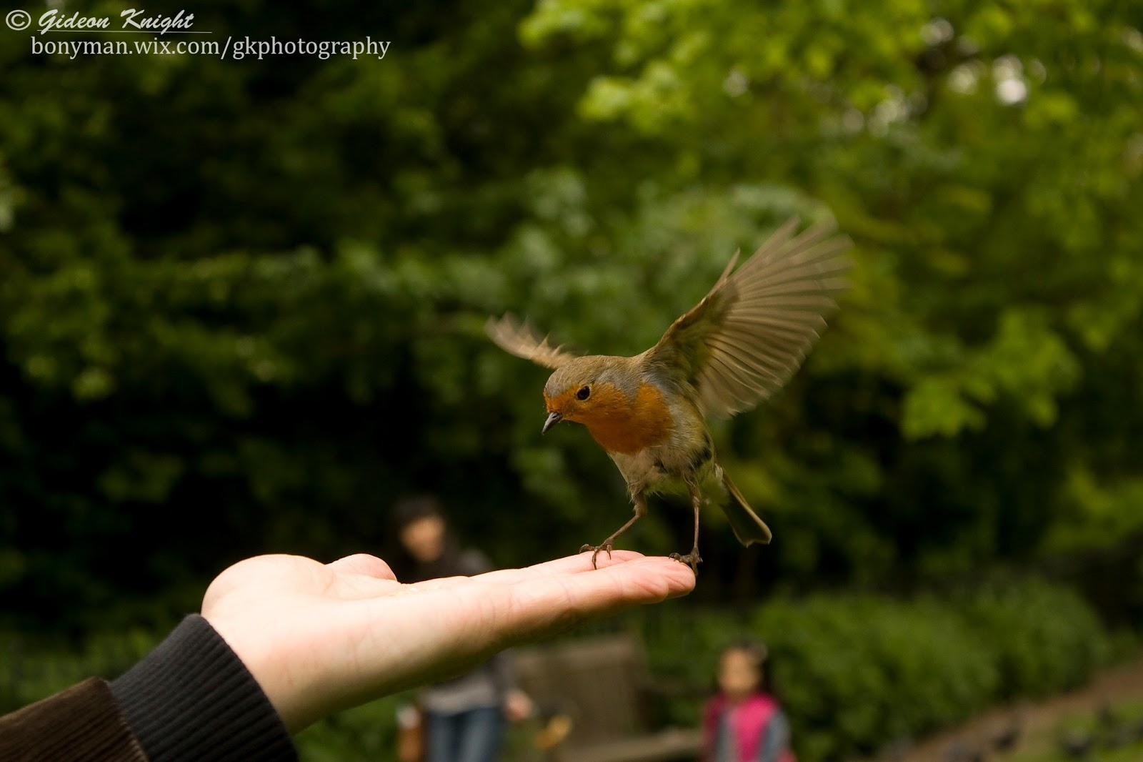 A bird in hand is worth two in the bush part 2 5