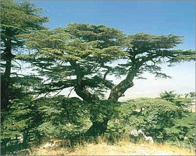 رحلة الى لبنان 39830_1188884334