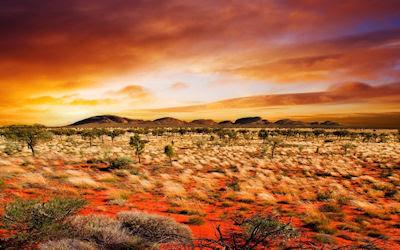 Vegetación en el desierto - Desert vegetation
