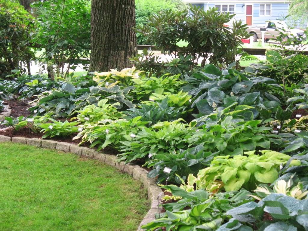 Lace Modern garden design pictures