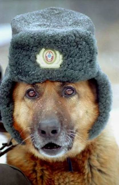 funny-dog-with-hat-3