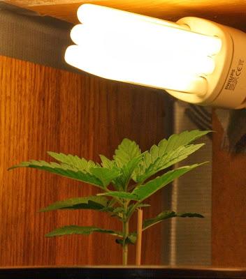 blog sulla coltivazione di marijuana