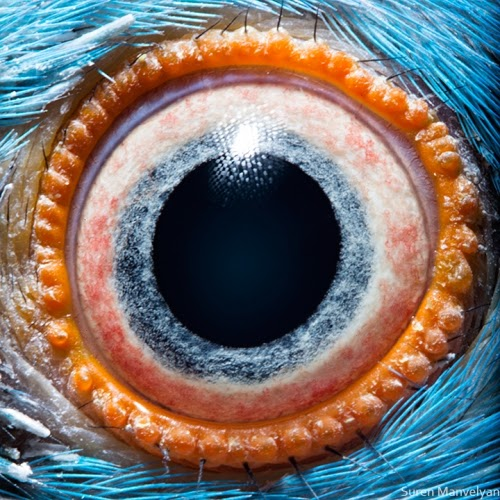 This is a close up of a parrot eye.