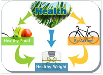 healthy cycle