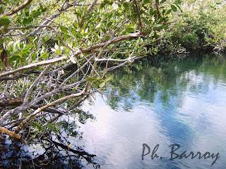 paysages du Mexique Sian Ka'an mangrove