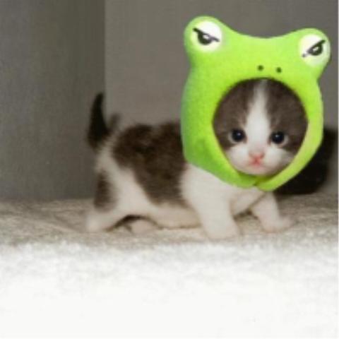 Cute cat ever