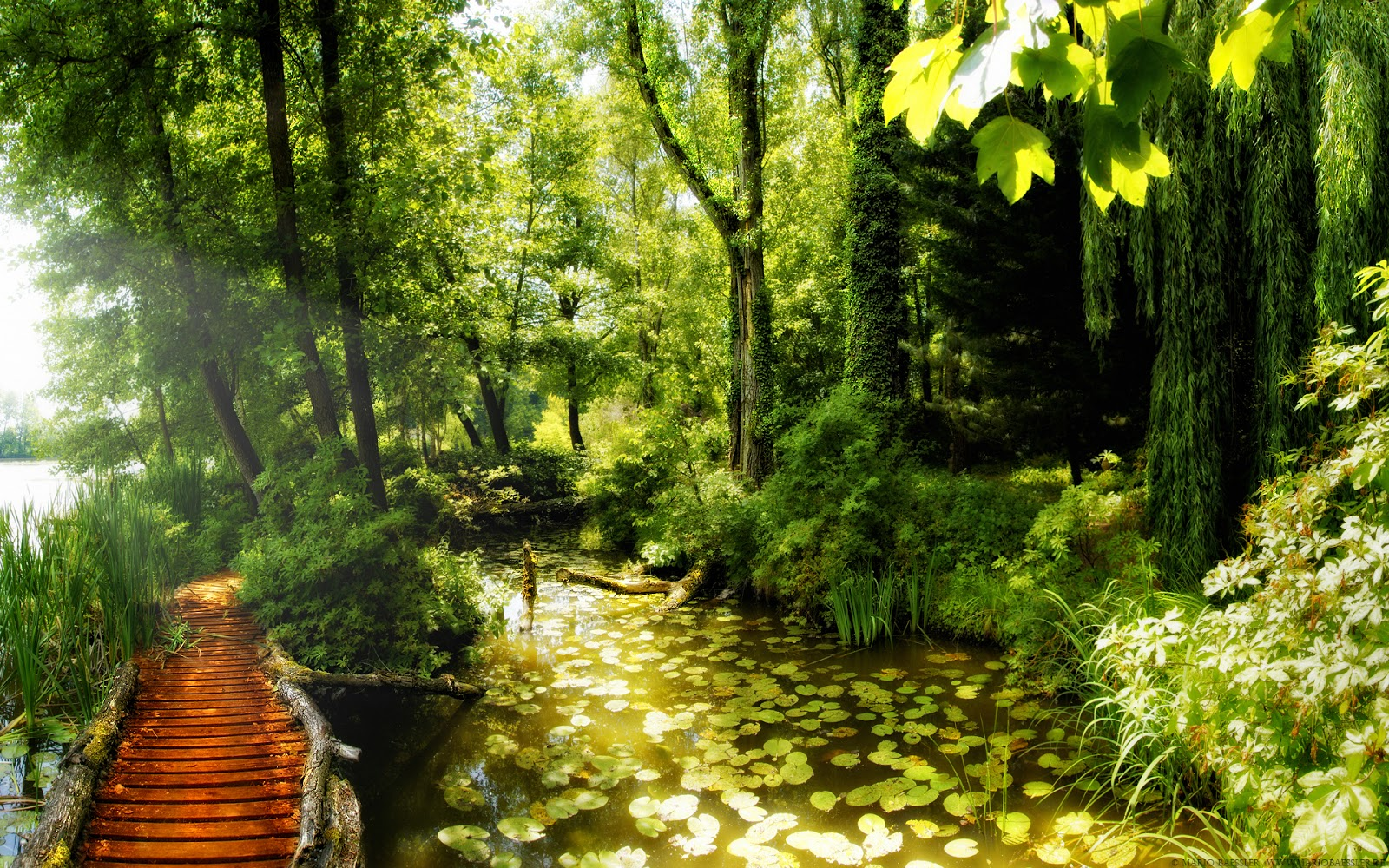 http://1.bp.blogspot.com/-gdF8FCxC7l4/URjoVIe_IqI/AAAAAAAABfY/PZjuEsm9mZA/s1600/beautiful-summer-2012-path-in-the-forest-hd-wallpaper.jpg
