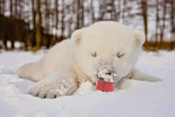 أجمل صور حيوانات