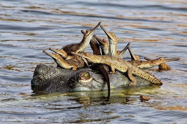 Young Wildlife Photographer of the Year - Grand Title Winner