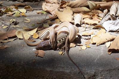 wildlife photography snake