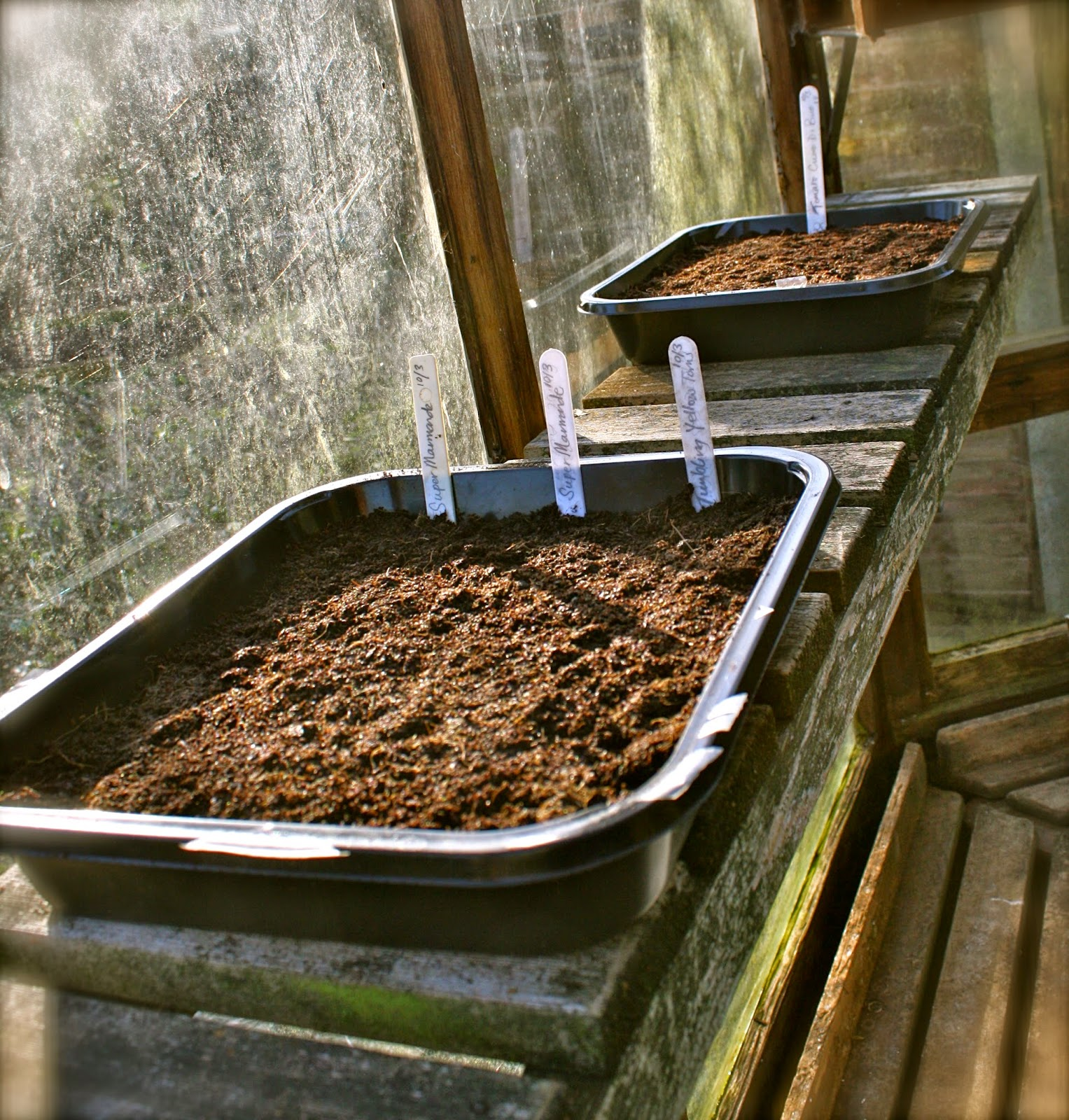 seed trays in the greenhouse