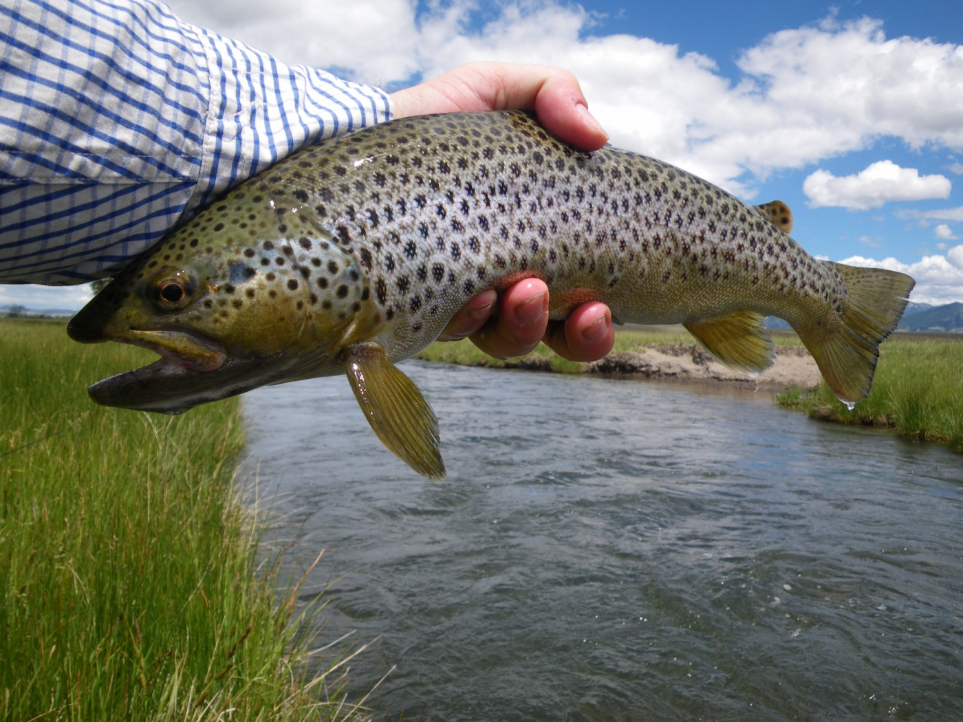 Guest Post Exceptional Fishing With Oversized Dries
