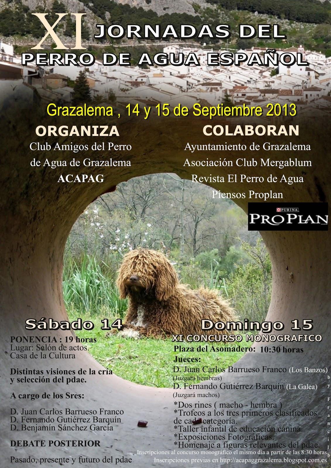 Perro de agua español de Benamaina, XI jornadas perro de agua español en Grazalema