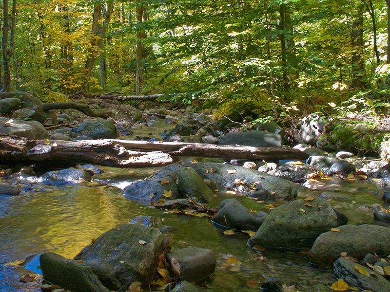 Un petit ruisseau rafraîchissant coulant en pleine forêt
