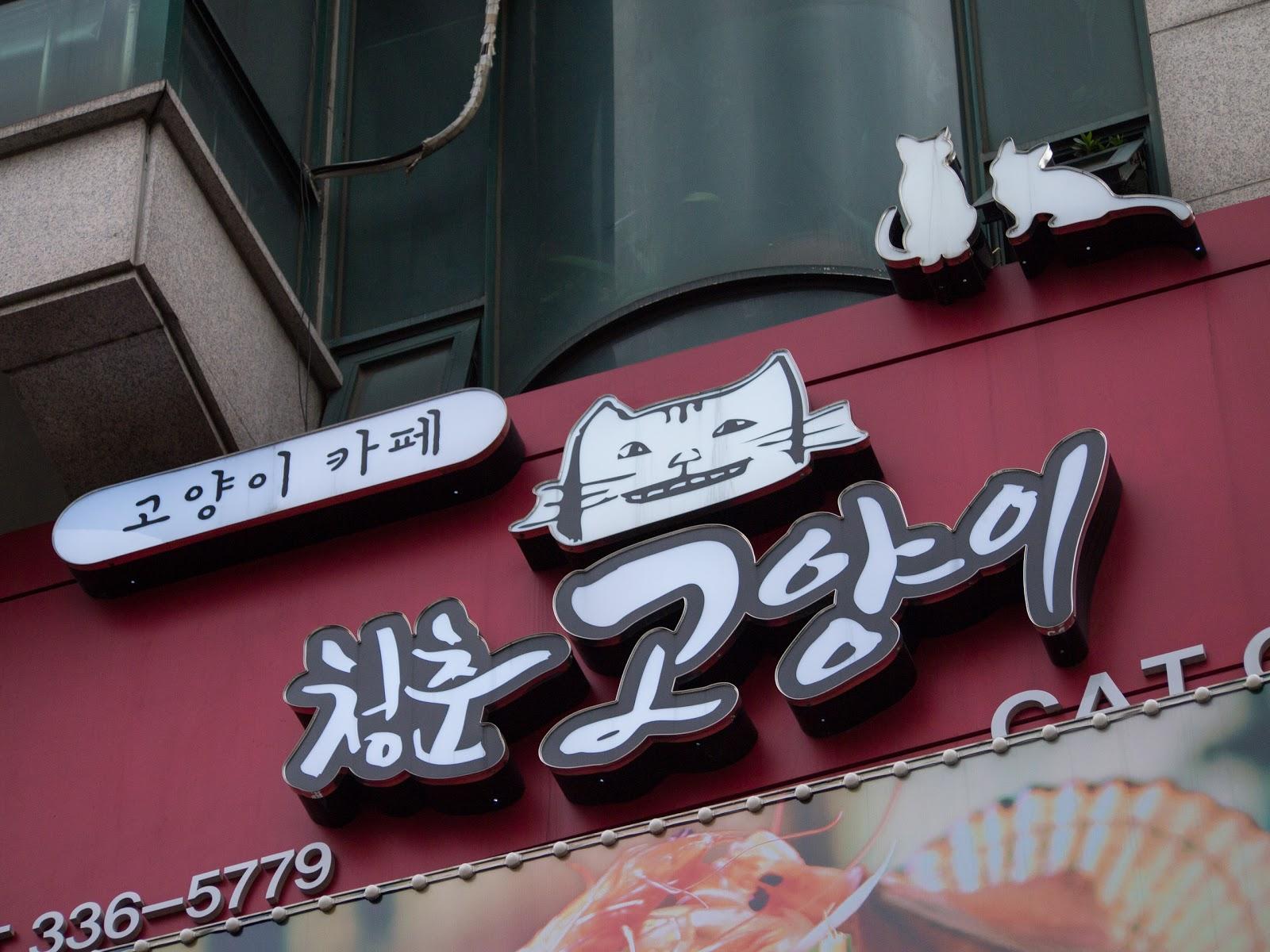 cat cafe, hongik, hongdae