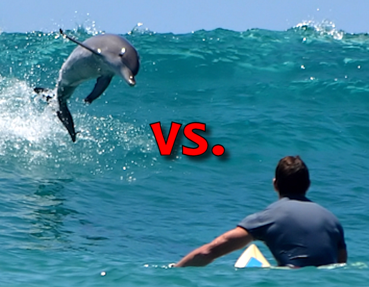 Dolphins versus Surfers