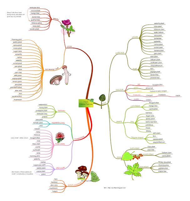 Plants Kingdom: External Features Of Plants