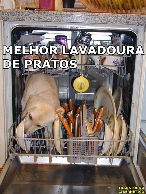 cachorro lambendo pratos