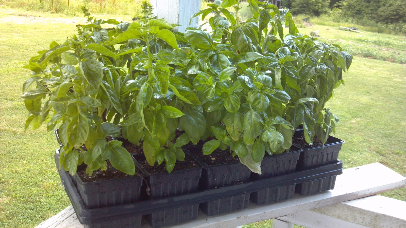 Balcony Kitchen Garden Balcony Vegetable Garden